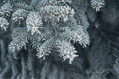 积雪的树圣诞节背景  库存图片