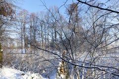 积雪的树在公园在冬天 免版税库存照片
