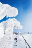 积雪的树在冬天公园 免版税库存图片