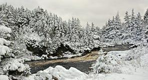 积雪的树在加拿大 免版税图库摄影