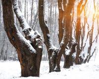积雪的树在城市公园 库存图片