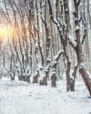 积雪的树在城市公园 库存照片