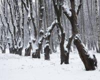 积雪的树在城市公园 免版税库存照片