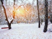 积雪的树在城市公园 免版税图库摄影