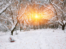 积雪的树在城市公园 免版税库存图片