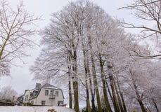 积雪的树在我的家附近射击了在哥特人 叫的公园 免版税库存图片