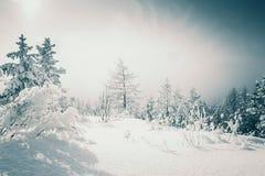 积雪的树在日落的冬天森林里 免版税库存照片