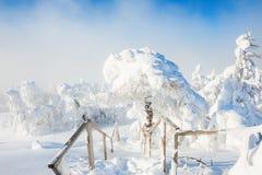 积雪的树在降雪以后的冬天森林里 库存照片