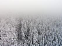 积雪的树在雾期间的一个山区 免版税图库摄影