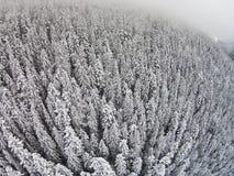 积雪的树在雾期间的一个山区 免版税库存照片