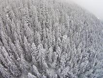 积雪的树在雾期间的一个山区 免版税库存图片