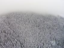 积雪的树在雾期间的一个山区 图库摄影