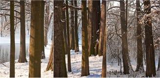 积雪的树干和分支 与雪和湖的美好的冬天风景 冬天在森林,通过树干晒黑发光 免版税库存照片