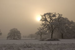 积雪的树有有薄雾的背景 库存照片