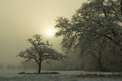 积雪的树有有薄雾的背景 免版税库存图片