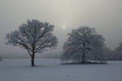 积雪的树有有薄雾的背景 免版税库存照片