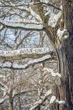 积雪的树枝在冬天公园,特写镜头 库存照片