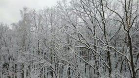 积雪的树枝的鸟瞰图 影视素材