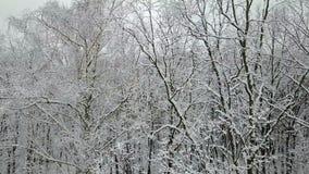 积雪的树枝的鸟瞰图 股票视频