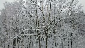 积雪的树枝的鸟瞰图 股票录像
