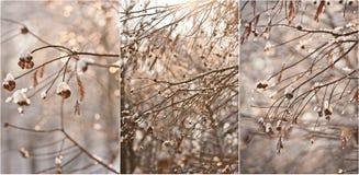 积雪的树枝 与积雪的结构树的美好的冬天横向 冬天在森林,通过分支晒黑发光 免版税图库摄影