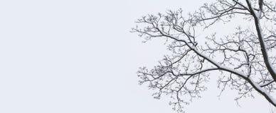 积雪的树枝 美丽的冬天场面照片 复制空间 免版税图库摄影