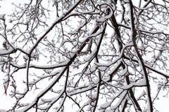 积雪的树枝 美丽的冬天场面照片 库存照片