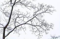 积雪的树枝 美丽的冬天场面照片 免版税库存图片