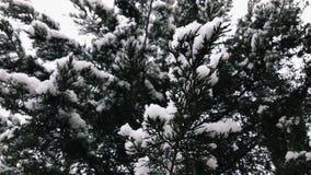 积雪的树枝 股票视频