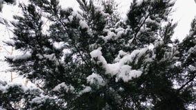 积雪的树枝 影视素材