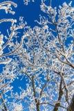 积雪的树枝 免版税库存图片