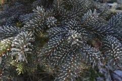 积雪的树枝 库存照片