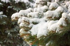 积雪的树枝 免版税图库摄影