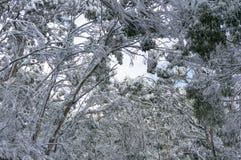 积雪的树梢 33c 1月横向俄国温度ural冬天 免版税库存照片