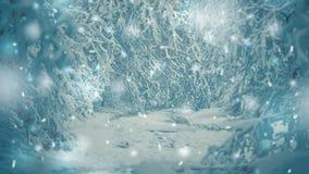 积雪的树种植冬天过滤器的,作用森林 股票视频