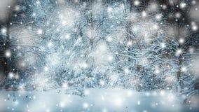 积雪的树种植冬天过滤器的,作用森林 股票录像