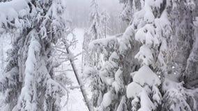 积雪的树鸟瞰图在山的在冬天 股票录像