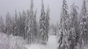 积雪的树鸟瞰图在山的在冬天 股票视频