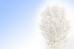 积雪的桦树 免版税库存图片