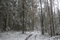 积雪的森林在村庄 免版税图库摄影