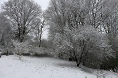 积雪的森林在村庄 库存照片