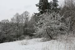 积雪的森林在村庄 免版税库存照片