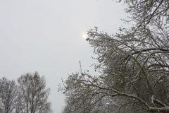 积雪的森林在村庄 免版税库存图片