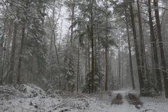 积雪的森林在村庄 库存图片