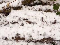 积雪的森林地板木头绊倒国家冬天12月 库存图片