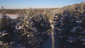 积雪的森林美好的鸟瞰图  股票录像
