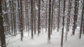 积雪的森林,难以置信的喀尔巴汗 免版税库存图片