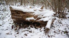 积雪的注册森林 免版税库存照片