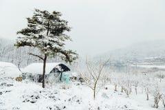 积雪的温室和湖在冬天 库存图片