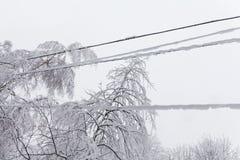 积雪的结冰的输电线,白色树枝冬天背景 恶劣天气降雪概念 免版税图库摄影